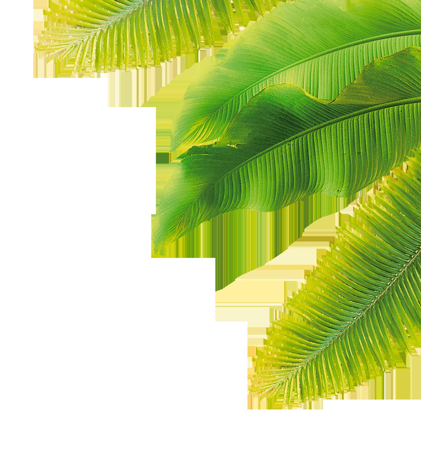 leaf-droit