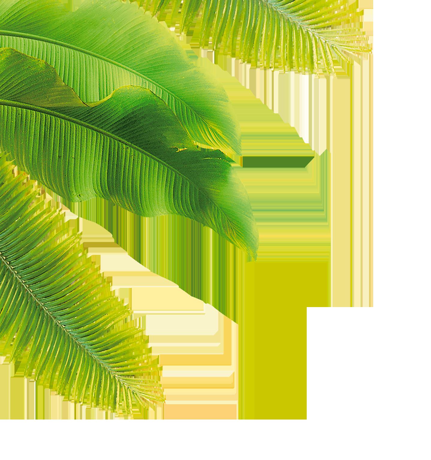 leaf-gauch